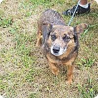 Adopt A Pet :: Camo - Murfreesboro, TN