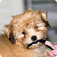 Adopt A Pet :: Toby - Milan, NY