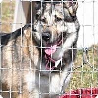 Adopt A Pet :: Solo - Hamilton, MT