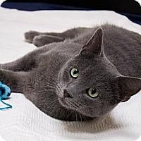 Adopt A Pet :: Gunner - Chicago, IL