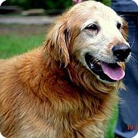 Adopt A Pet :: Murphy - White River Junction, VT