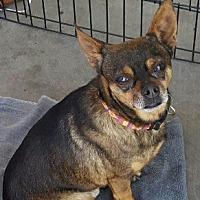 Adopt A Pet :: Gonzo - Goodyear, AZ