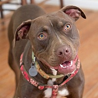 Adopt A Pet :: Fancy Pants - Homewood, AL
