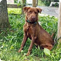 Adopt A Pet :: BLAKE - richmond, VA