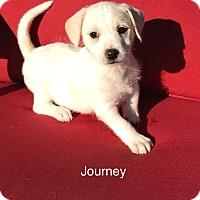 Adopt A Pet :: Journey - Brea, CA