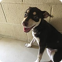 Adopt A Pet :: Boo - Kirby, TX