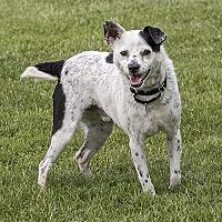 Adopt A Pet :: Griffin - McKenna, WA