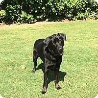 Adopt A Pet :: Obi - Greenville, SC