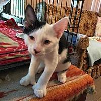 Adopt A Pet :: Patches - St. Cloud, FL