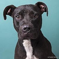 Adopt A Pet :: Aden - Anniston, AL
