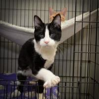 Adopt A Pet :: Muffin - Baton Rouge, LA
