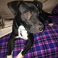 Adopt A Pet :: Mikey - Nashville, TN