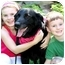 Photo 3 - Labrador Retriever Dog for adoption in Pawling, New York - DIAMOND