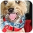 Photo 1 - Yorkie, Yorkshire Terrier Mix Dog for adoption in Tallahassee, Florida - Cody