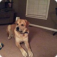 Adopt A Pet :: Jasper - Georgetown, KY
