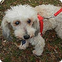 Adopt A Pet :: Gumdrop - Madison, WI