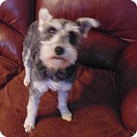 Adopt A Pet :: Diva - Crystal River, FL