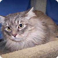 Adopt A Pet :: Marshall - Colorado Springs, CO