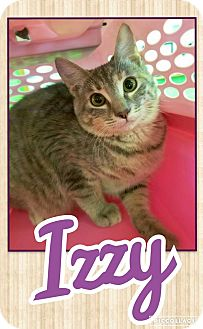 Domestic Shorthair Kitten for adoption in Edwards AFB, California - Izzy