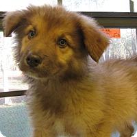 Adopt A Pet :: Gordita - South Dennis, MA