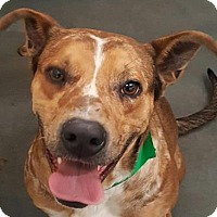 Adopt A Pet :: Cavanaugh - Fort Smith, AR