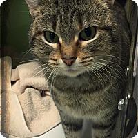 Adopt A Pet :: meow - Muskegon, MI