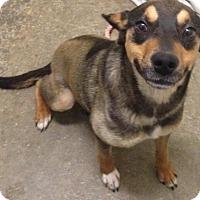 Adopt A Pet :: Chloe - Valley Falls, KS