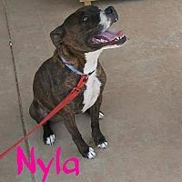 Adopt A Pet :: Nyla - Lancaster, CA