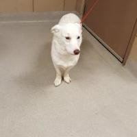 Adopt A Pet :: 53 - Mesquite, TX