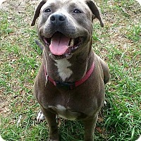 Adopt A Pet :: Sasha - New Smyrna Beach, FL