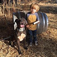 Adopt A Pet :: Storm-Adoption Fee Sponsored!! - Lincoln, CA