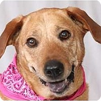 Adopt A Pet :: Sadie - Windham, NH