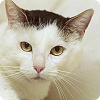 Adopt A Pet :: Polar - Marietta, GA