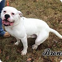 Adopt A Pet :: Bronx - Cary, IL