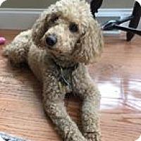 Adopt A Pet :: Eddie - Mt Gretna, PA