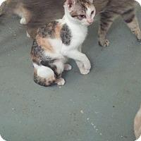 Adopt A Pet :: Evee - San Ramon, CA