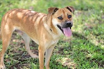 Labrador Retriever Mix Dog for adoption in Sussex, New Jersey - SKIPPY