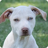 Adopt A Pet :: Liza Jane - Broken Arrow, OK