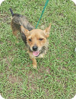 Terrier (Unknown Type, Medium) Mix Dog for adoption in Tavares, Florida - Minnie