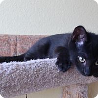 Adopt A Pet :: Angus - El Cajon, CA