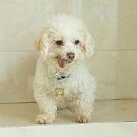 Adopt A Pet :: Bobby - Culver City, CA