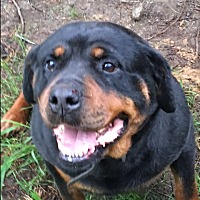 Adopt A Pet :: Bridget (URGENT) - Treton, ON