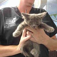 Adopt A Pet :: A504665 - San Bernardino, CA