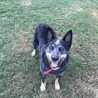 Adopt A Pet :: Gator - Longview, TX