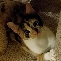 Adopt A Pet :: DORA - Diamond Bar, CA
