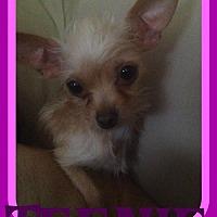 Adopt A Pet :: TEENIE - Sebec, ME