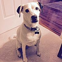 Adopt A Pet :: KAYA - NYC, NY