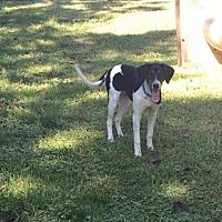 Adopt A Pet :: Happy - Crocker, MO