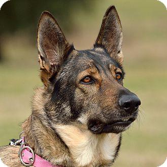 German Shepherd Dog Dog for adoption in Dacula, Georgia - Ivy