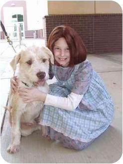 Terrier (Unknown Type, Medium) Mix Dog for adoption in Olive Branch, Mississippi - Ernie